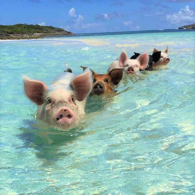 バハマの無人島エグズーマ島で
